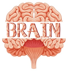 Human brain in closer look vector