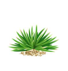 Mini mondo grass with small stone vector