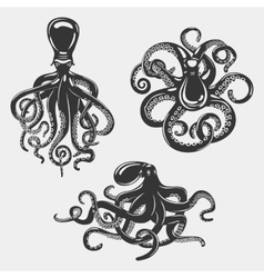 Black octopus or underwater swimming mollusk vector
