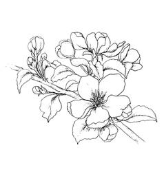 Hand drawn branch cherry blossom vector
