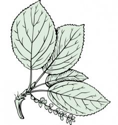 poplar vector image