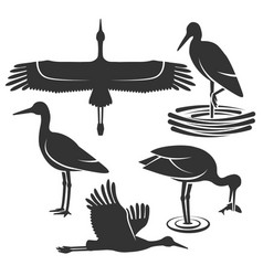 set black stork silhouettes vector image