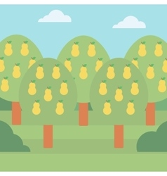 Background of pear trees vector image