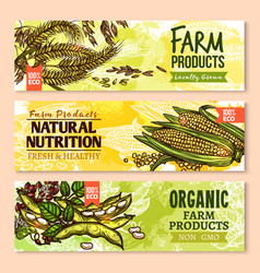 Banners of farm grown grain and cereals vector