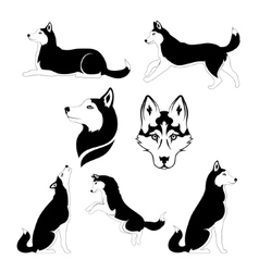graphic silhouette a dog breed siberian vector image