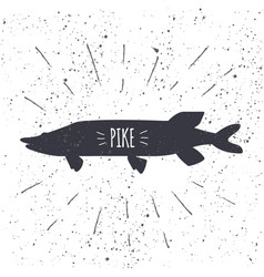 hand drawn pike icon fish with textured background vector image
