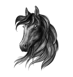Horse head watercolor sketch portrait vector