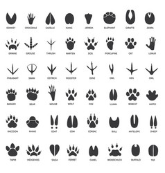 animal tracks footprints swan llama and vector image