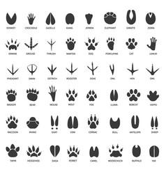 Animal tracks footprints swan llama vector