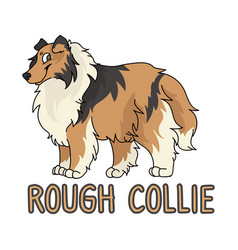 Cute cartoon rough collie dog breed with text word vector