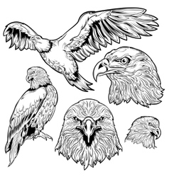 Eagle Tattoo Set vector image