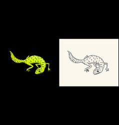 ibiza wall lizard common leopard or spotted fat vector image
