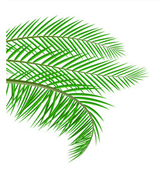 Tropical green leaves jungle leaves vector