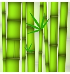 Background - green bamboo stems and twig with vector image