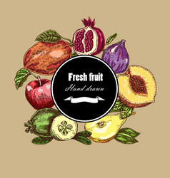 hand drawn fruits collection botanical banner vector image
