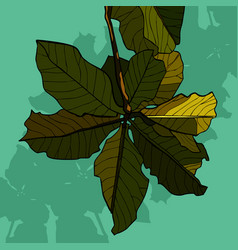 painted inflorescence of green leaves of a tree vector image