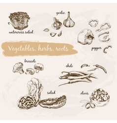 Vegetables herb and roots vector