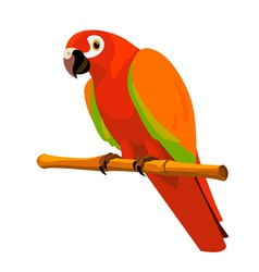 red parrot on a perch vector image