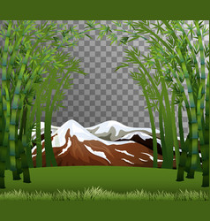 bamboo forest scene with transparent background vector image