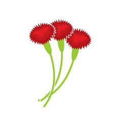 Carnation isolated floral bouquet on white vector