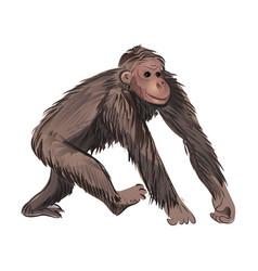 Cute jungle tropical monkey mammal brown color vector