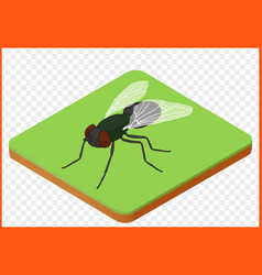 Fly insect musca domestica vector
