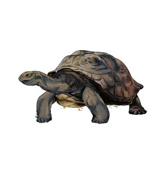 galapagos turtle from a splash watercolor vector image