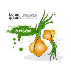 Onion hand drawn watercolor vegetable on white vector
