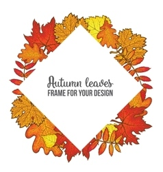 Round frame with fall leaves - maple oak rowan vector