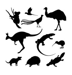 set black silhouettes australian animals vector image
