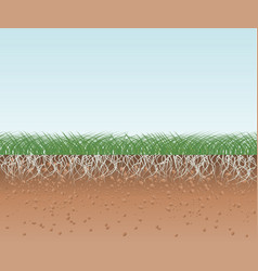 grass with roots and soil vector image vector image