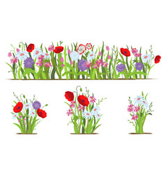 flowerbed set of wild forest and garden flowers vector image