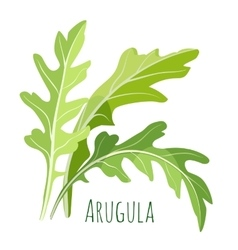 Green arugula leaves with colourful inscription vector image