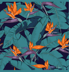 Flowers and leaves strelitzia vector