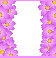 pink cosmos flower border vector image
