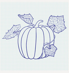 pumpkin with leaves blue outline drawing on vector image