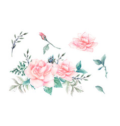 watercolor pink roses vintage design set vector image