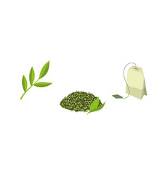 set - green tea bag leaf tea and tea branch vector image