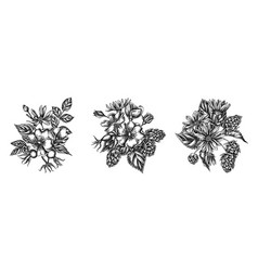 Flower bouquet black and white dog rose hop vector