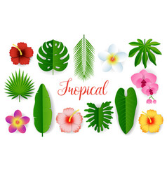 paper cut tropical plant leaves and flowers vector image