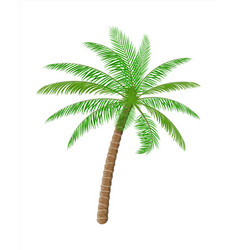 tropical green palm jungle leaves vector image