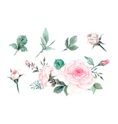 Watercolor pink roses vintage design set vector