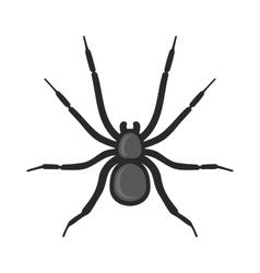Black Spider Icon on White Background vector image