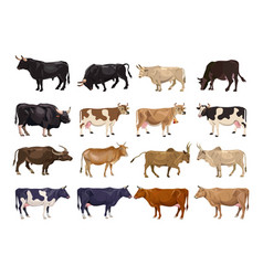 Cattle breeding set vector