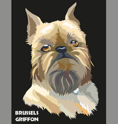 colored brussels griffon portrait vector image