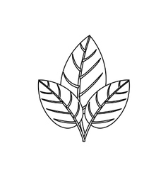 Contour three leaves with ramifications vector