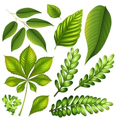 Different kind of leaves vector image