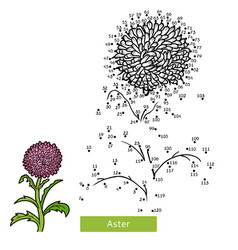 numbers game flower aster vector image