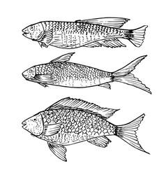 set hand drawn fish healthy food drawings set vector image