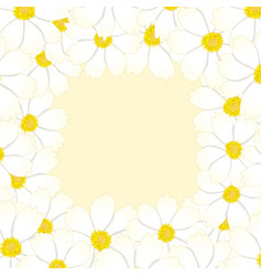 White cosmos flower border vector